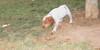Chupi (boy, puppy, 1st time)_002