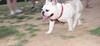 Alice (girl, french bulldog, pup, new)_004