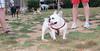 Alice (girl, french bulldog, pup, new)_001