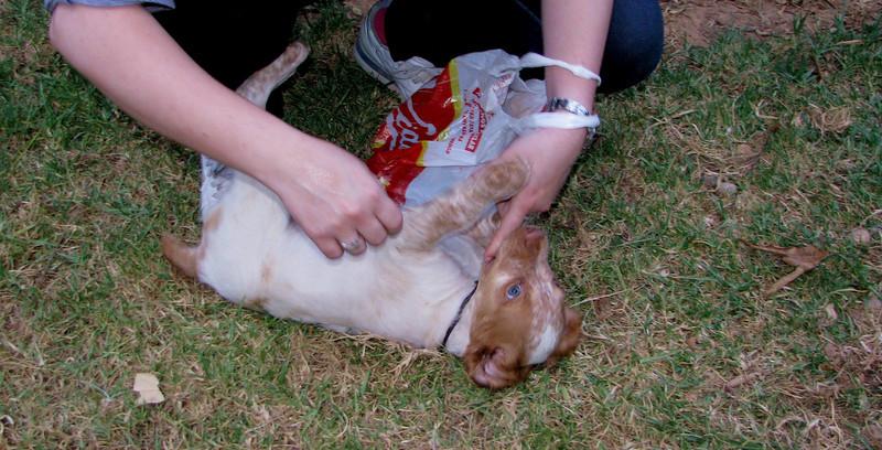 Chupi (puppy, boy)_006