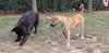 Aitana (girl), Dog_001