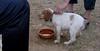 Chupi (puppy, boy)_004