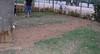 Dog Park_004