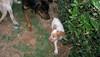 Chupi (puppy, boy)_003