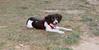 Leo (britnany, pup, boy)_002