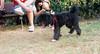 Coco (boy, pup)_002