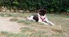 Leo (britnany, pup, boy)_001