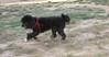 Coco (boy, pup)_001