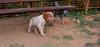 Chupi (puppy boy)_005