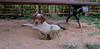 Chupi (puppy boy)_004