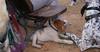 Chupi (puppy), Sultan (boy)