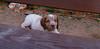 Chupi (puppy boy)_003