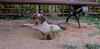 Chupi (puppy boy)_007