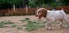 Chupi (puppy boy)_001