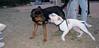 Socio (boy), other dog_001