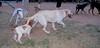 Senda (puppy girl), Chupi (puppy)