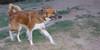 Dogs Of ayora_003