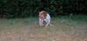 Chupi (puppy boy)