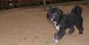 Coco (boy puppy)_006