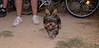 Badi (boy puppy)_001