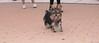 Badie (boy puppy)_001