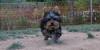 Badi (puppy)_002