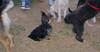 Badie (puppy boy)_004