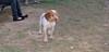 Chupi (boy puppy)