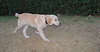 Bruce (puppy boy)_002