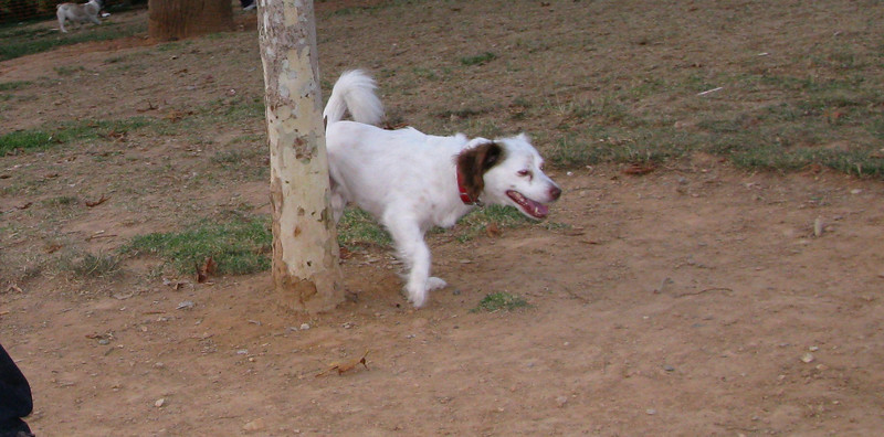 ayora dogs_001