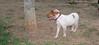 Chupi (boy puppy)_002