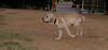 Bruce (puppy boy)_001