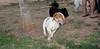 Chupi (boy puppy)_003