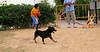 ayora dogs_005