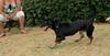 ayora dogs_006