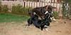 ayora dogs_014