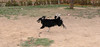 ayora dogs_008