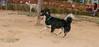 ayora dogs_012