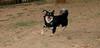 ayora dogs_009
