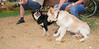 ayora dogs_011