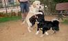 ayora dogs_017
