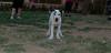 ayora dog Puppy_004