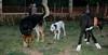 Ayora dog puppy, Maddie, Neva_001