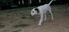 ayora dog Puppy_001
