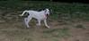 ayora dog Puppy_003