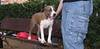 Aster (boy puppy 4 mnths)_010
