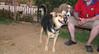 Aster (boy puppy), Maddie_001