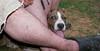 Aster (boy puppy 4 mnths)_005