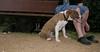 Aster (boy puppy 4 mnths)_003