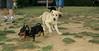Bruce (puppy), Teko_004